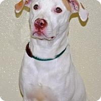 Adopt A Pet :: Sprite - Port Washington, NY