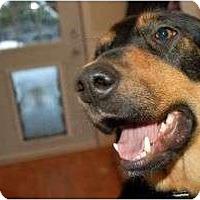 Adopt A Pet :: Jasmine - Surrey, BC