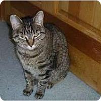 Adopt A Pet :: Zoey - Hamburg, NY
