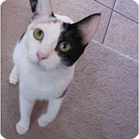Adopt A Pet :: Lacey - Mesa, AZ