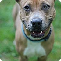 Adopt A Pet :: Liam - Tinton Falls, NJ