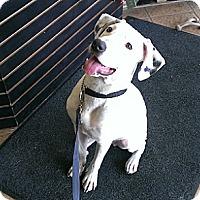 Adopt A Pet :: Joey - Hamilton, ON
