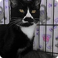 Adopt A Pet :: Zoe - Morgan Hill, CA