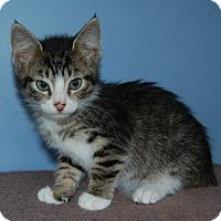 Adopt A Pet :: Indy - McDonough, GA