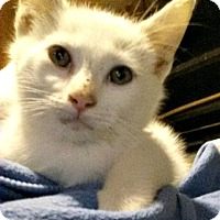 Adopt A Pet :: Herbie Hancock - Toledo, OH