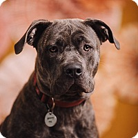 Adopt A Pet :: Mistletoe - Portland, OR
