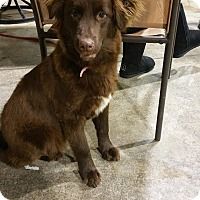 Adopt A Pet :: Trixie - Lima, OH
