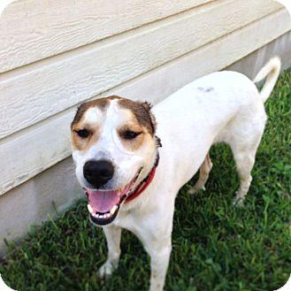 Australian Cattle Dog Mix Dog for adoption in Austin, Texas - Carlie