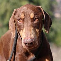 Adopt A Pet :: Lance - Fillmore, CA