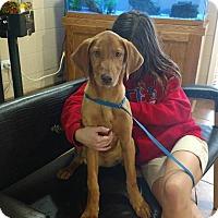 Adopt A Pet :: Cagney - Deer Park, NY