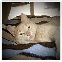 Adopt A Pet :: HAZEL - Medford, WI