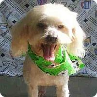 Adopt A Pet :: Mac - Encino, CA