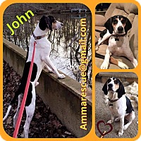 Adopt A Pet :: John - Dunmore, WV