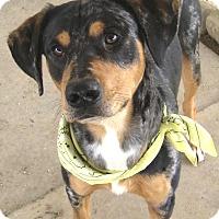Adopt A Pet :: Blu - Pilot Point, TX