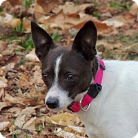 Adopt A Pet :: Ruby (VA) - Virginia Beach, VA