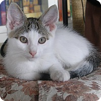 Adopt A Pet :: Hollyhock - Covington, KY