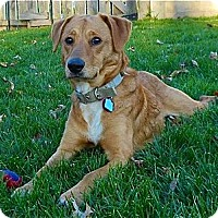 Adopt A Pet :: Charlie - Hastings, NY