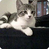 Adopt A Pet :: Valentino - Montreal, QC