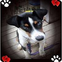 Adopt A Pet :: Bonnie - Cincinnati, OH