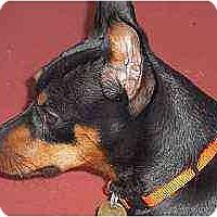Adopt A Pet :: Sergi - Nashville, TN