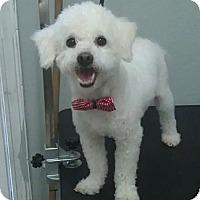 Adopt A Pet :: Fluffy - South Gate, CA