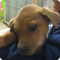 Adopt A Pet :: Donner - Ludington, MI