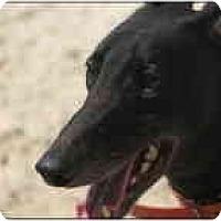 Adopt A Pet :: Mark - St Petersburg, FL