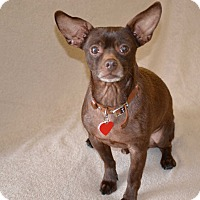 Adopt A Pet :: Diesel..I am easy and so sweet - Redondo Beach, CA
