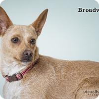Adopt A Pet :: Broadway - Phoenix, AZ
