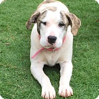 Adopt A Pet :: Gorda - McLoud, OK