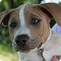 Adopt A Pet :: Tatum - Mount Juliet, TN