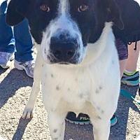 Adopt A Pet :: Wally - Wappingers, NY