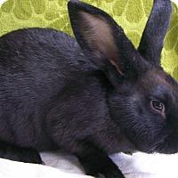 Adopt A Pet :: Jinx - Harrisburg, PA
