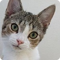 Adopt A Pet :: Quattro - Columbia, SC