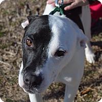 Adopt A Pet :: Deuce - Seabrook, NH