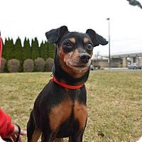 Adopt A Pet :: Duke - Meridian, ID