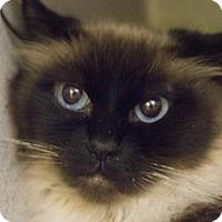 Adopt A Pet :: Aqua - Mountain Home, AR