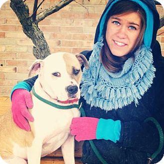 Terrier (Unknown Type, Medium)/Bulldog Mix Dog for adoption in Troy, Michigan - Jada