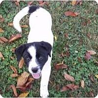 Adopt A Pet :: Mindy - Adamsville, TN