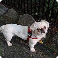 Adopt A Pet :: Taylor - Richmond, VA
