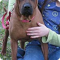 Adopt A Pet :: LIZZY - Bryan, TX