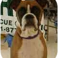 Adopt A Pet :: Darielle - Albany, GA