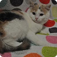 Adopt A Pet :: Thelma - Rockaway, NJ