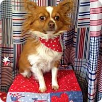 Adopt A Pet :: Chico - Acushnet, MA