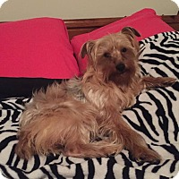 Adopt A Pet :: Taco - Arden, NC