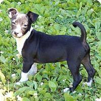 Adopt A Pet :: Gere(6 lb) New Pics & Video - SUSSEX, NJ