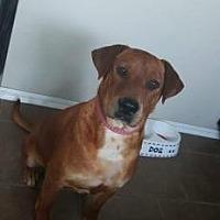 Adopt A Pet :: Nova - Oklahoma City, OK