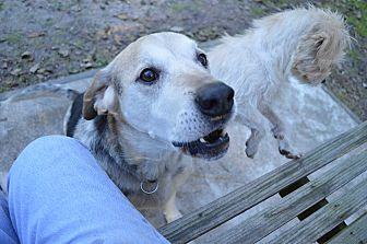 Hound (Unknown Type)/Shepherd (Unknown Type) Mix Dog for adoption in wilson, North Carolina - ~~BINGO~~
