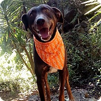 Adopt A Pet :: Nena - Courtesy Post - Encino, CA
