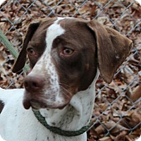 Adopt A Pet :: Miss Cooper - Harrisonburg, VA